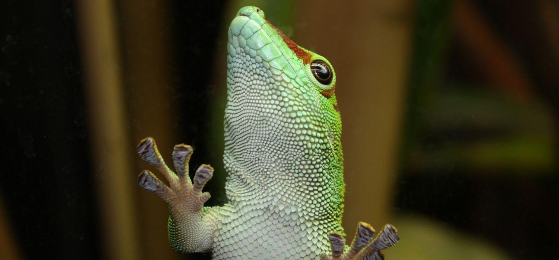 Slider04_Gecko